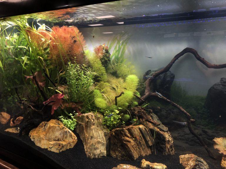 Community Tank Suggestions Elmer S Aquarium