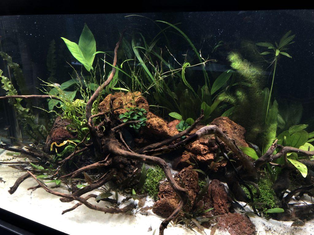 Freshwater Services Aquarium Maintenance Installation